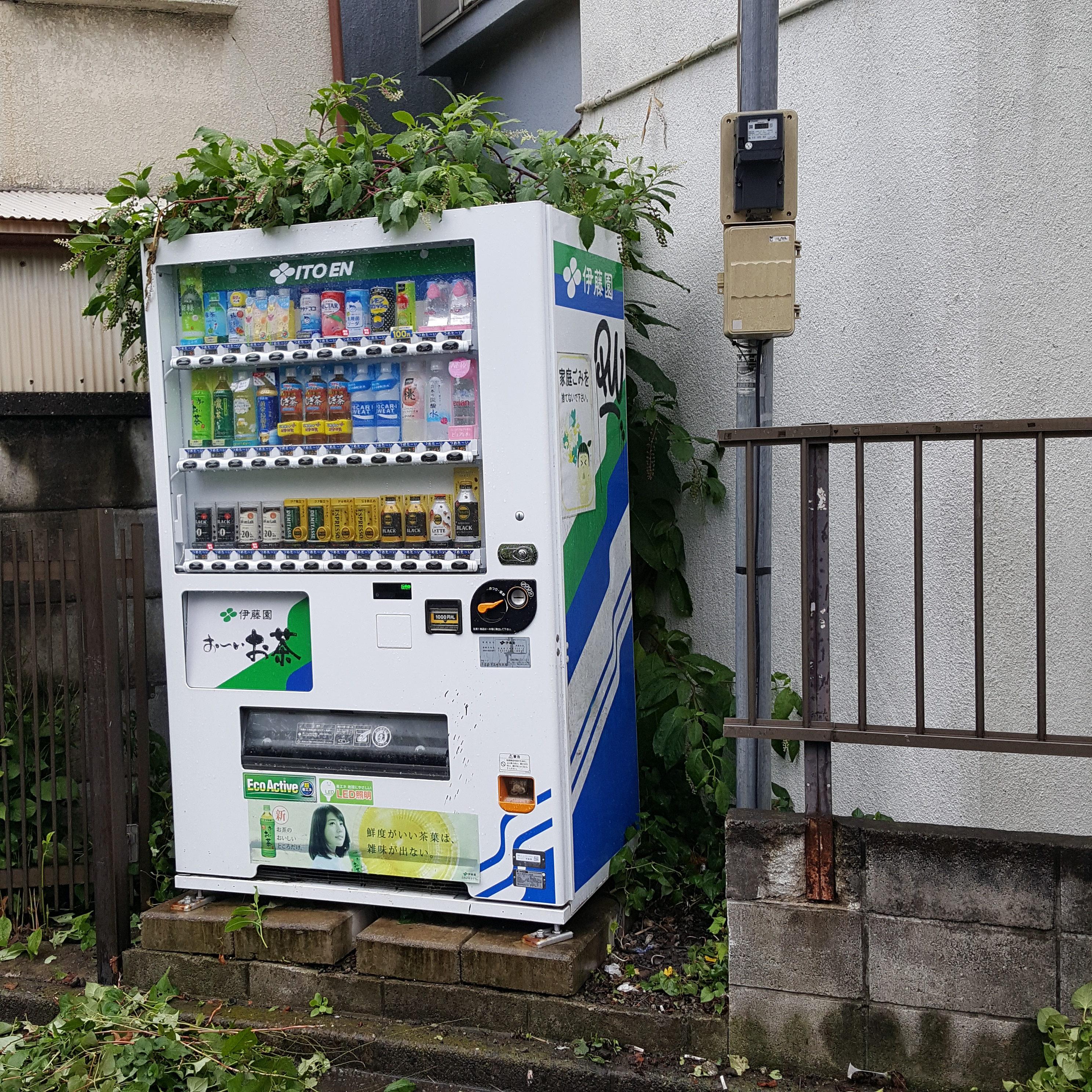 東京都世田谷区 木の伐採とお庭の草むしり