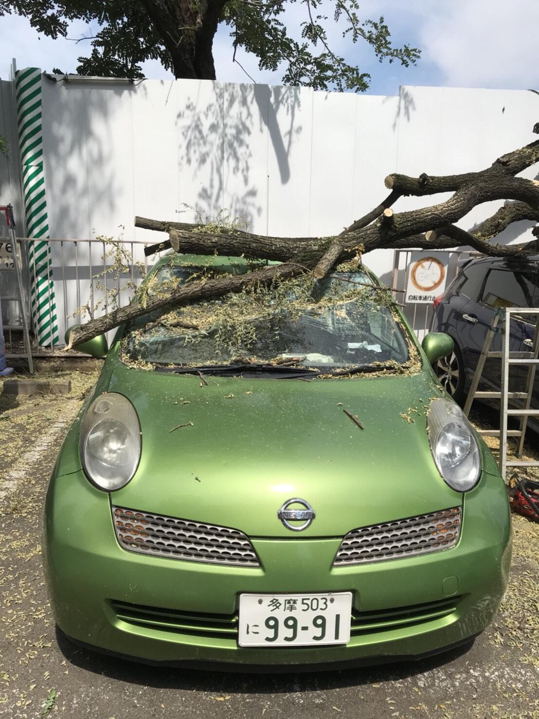 東京都青梅市  台風による倒れた木の撤去と廃棄処分