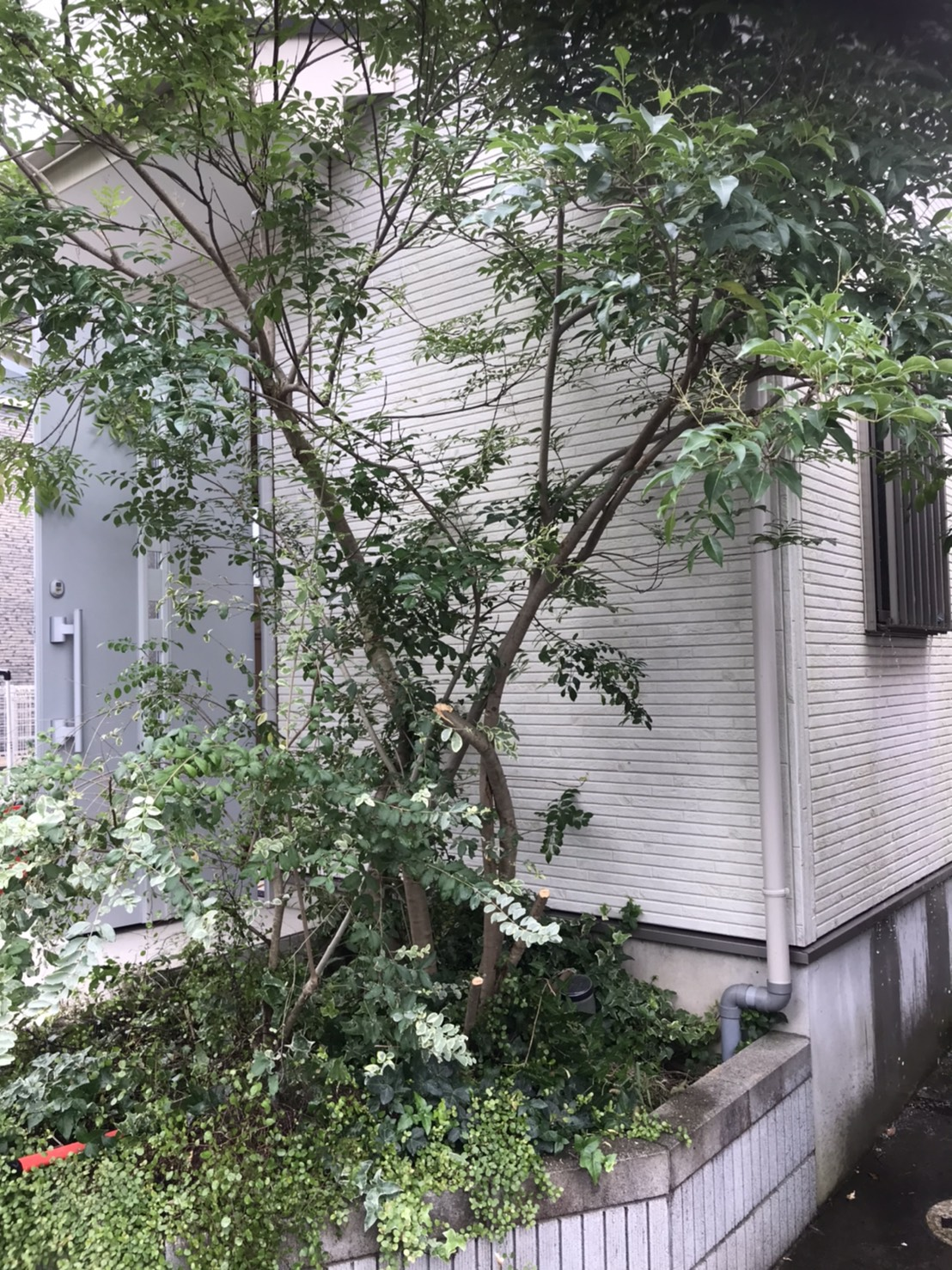 東京都清瀬市 不用品回収と生木伐採と回収